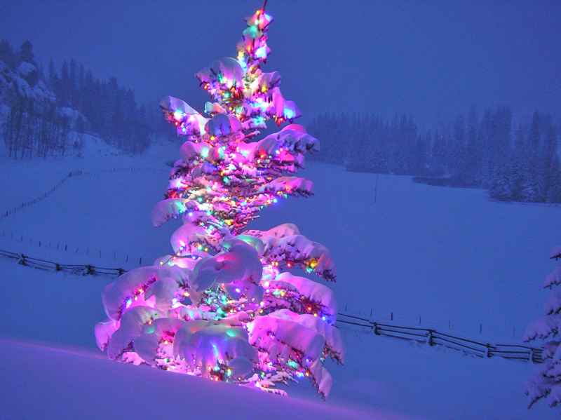 a very snowy outdoor Christmas tree