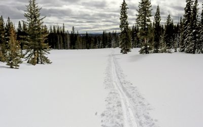 The Hogan Park Cross Country Ski Tour is a Colorado Classic!