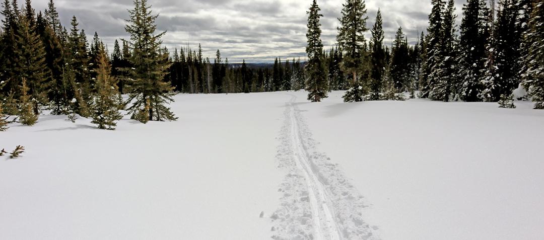 Hogan Park cross country ski tour