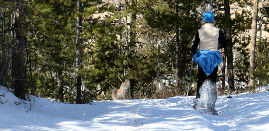 Dogs love to snowshoe