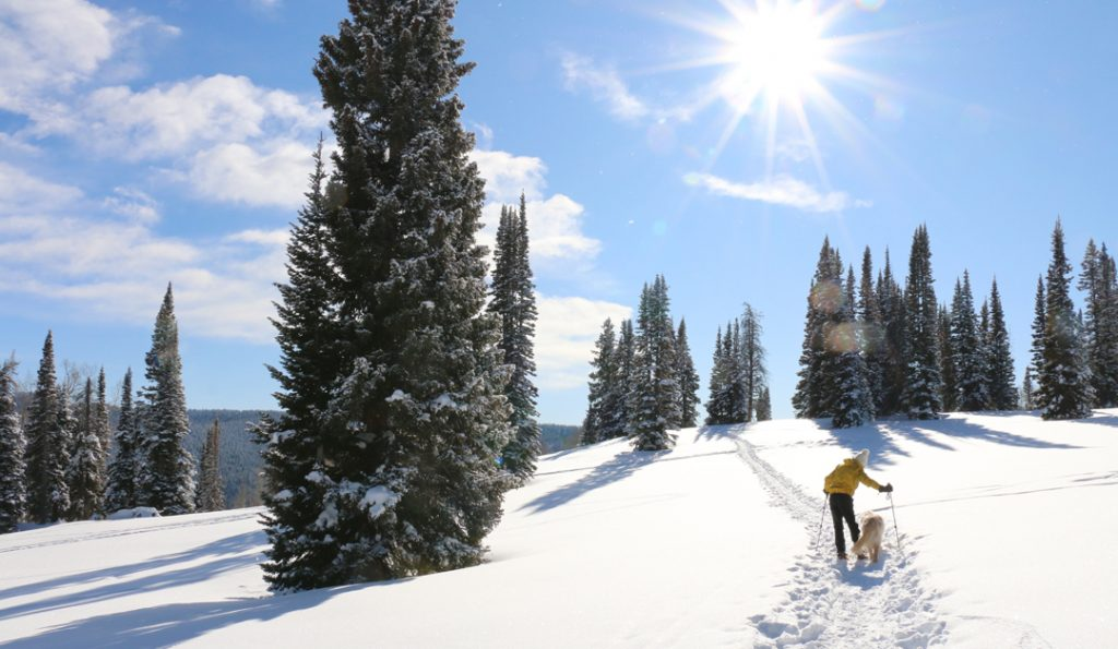 Where to Snowshoe in Steamboat