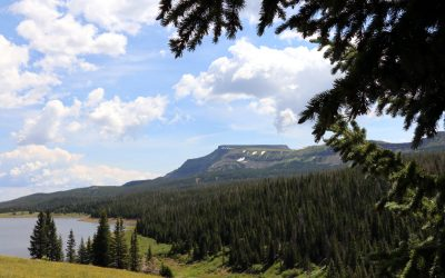 Routt County and Routt National Forest Trail and Access Update